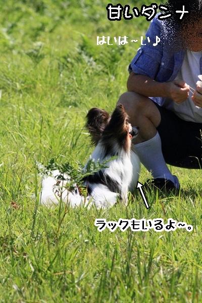2011_08_13  大山DPP_0030