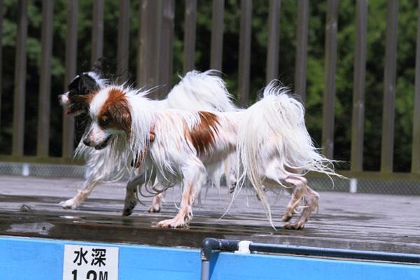 2011_08_16 葉山ブログ用2011_08_16  葉山DPP_0087