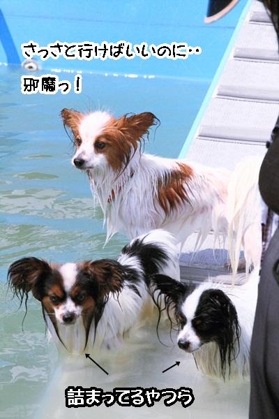 2011_08_16 葉山ブログ用2011_08_16  葉山DPP_0038