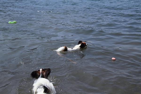 2011_08_18 西湖 ブログ用DPP_0006
