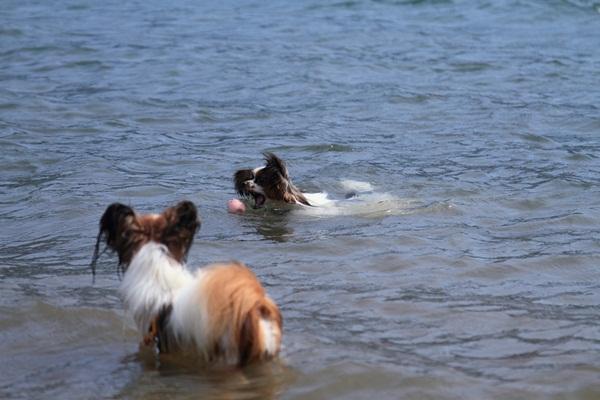 2011_08_18 西湖 ブログ用DPP_0220