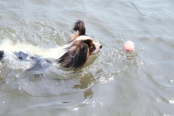 2011_08_18 西湖 ブログ用DPP_0164