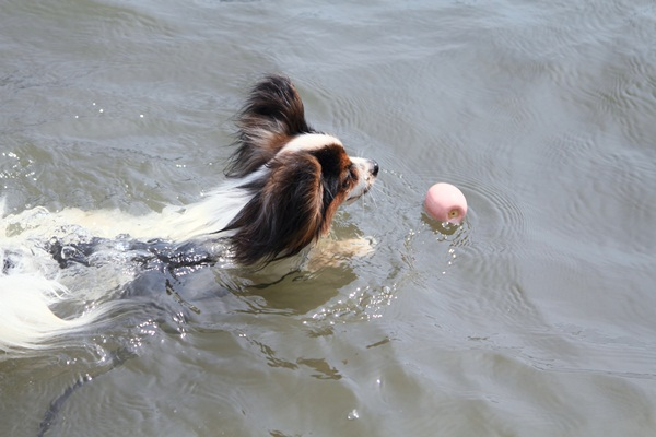 2011_08_18 西湖 ブログ用DPP_0161