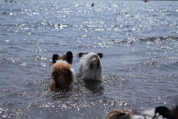 2011_08_18 西湖 ブログ用DPP_0226