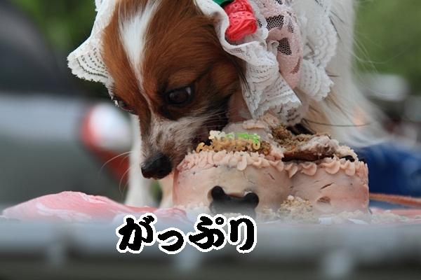 2011_08_18 西湖 ブログ用DPP_0075