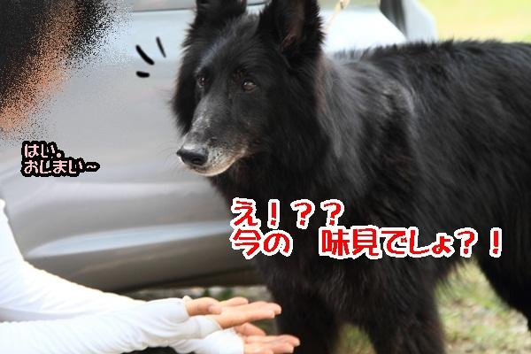 2011_08_18 西湖 ブログ用DPP_0081