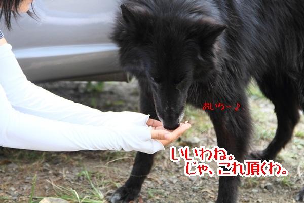 2011_08_18 西湖 ブログ用DPP_0080