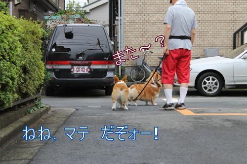 とうさんのお散歩
