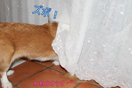 IMG_0743_convert_20120125105313-2.jpg