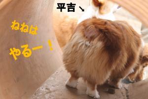 IMG_4374_convert_20120308092701-1.jpg