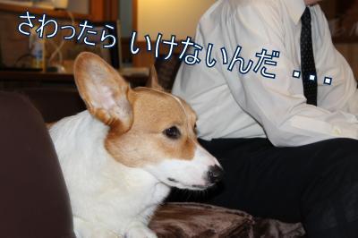 IMG_4932_convert_20111026084506-1.jpg