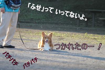 IMG_5111_convert_20111029115204-1.jpg