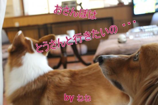 IMG_6168_convert_20111119114024-1.jpg