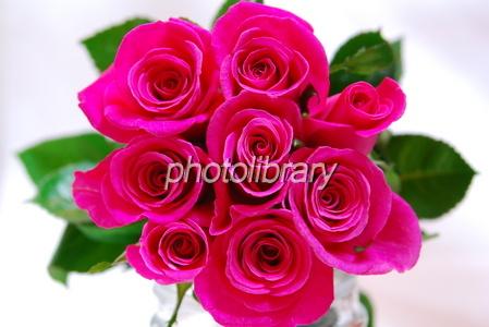 703929 薔薇の花束