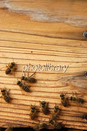 1035762 養蜂箱と蜜蜂