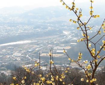 臘梅園の眺望A_convert_20120118211708