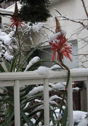 6年前の大雪日