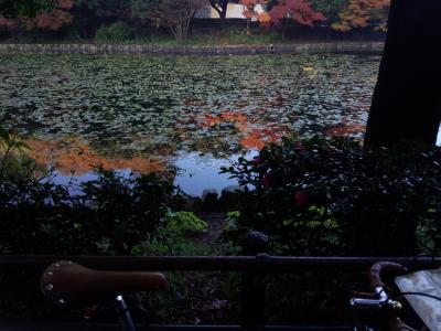 三ツ池 晩秋