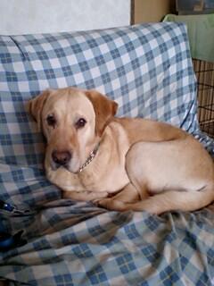 愛犬アンディーです。