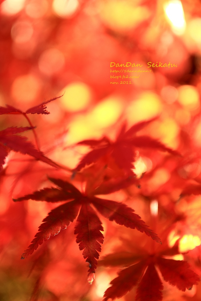 blog_2011_11_26_4206(2).jpg