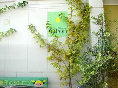citlon1z.jpg