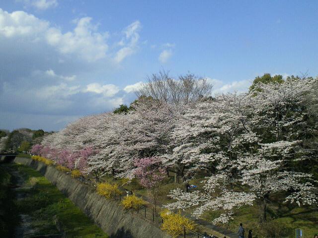 昭和記念公園1
