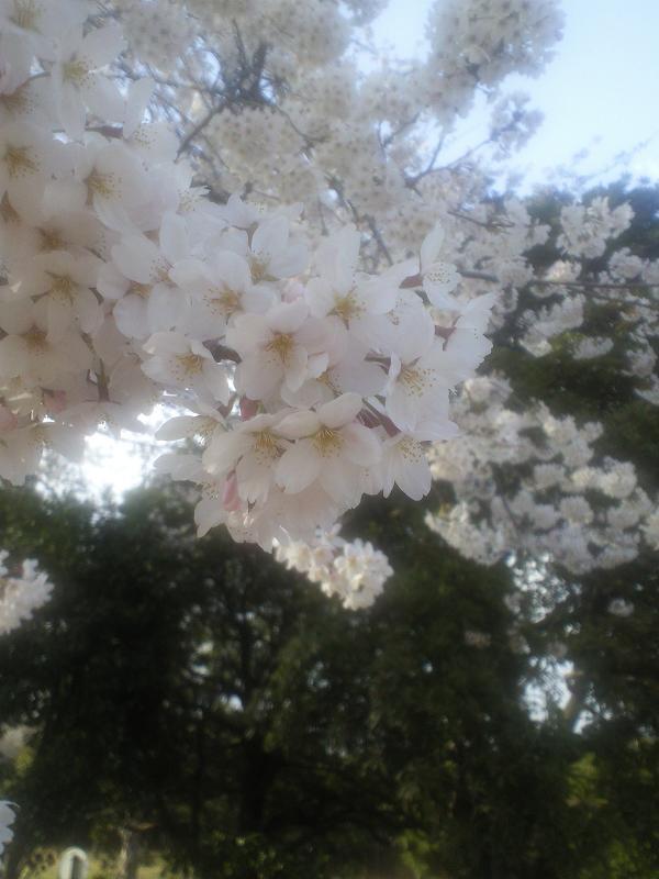 昭和記念公園2