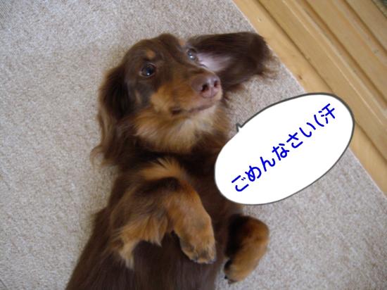 IMGP1214_convert_20100715100224.jpg