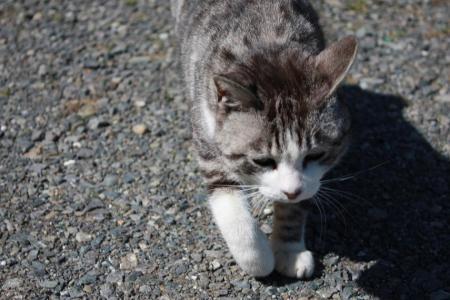 猫オフ会9