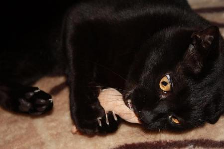 猫のおもちゃ3