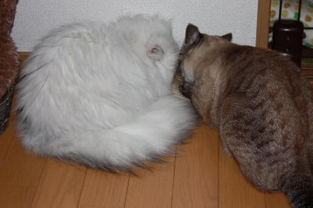猫のおもちゃ7