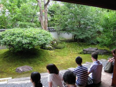 妙心寺東林院の沙羅双樹