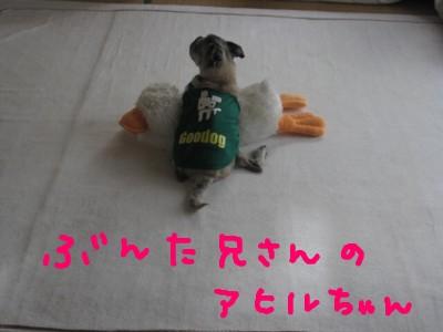 IMG_1800_20100727232032.jpg
