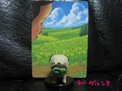 IMG_2981.jpg