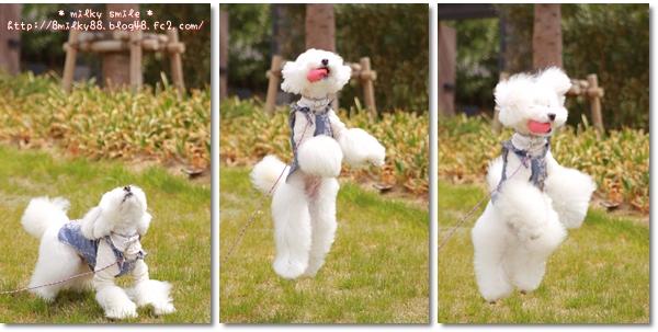 cats_20120415201148.jpeg