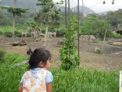 台北動物園2
