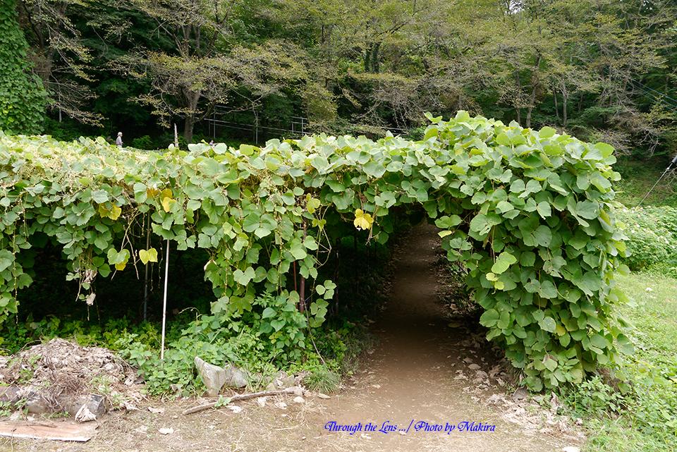 葛のトンネルL1