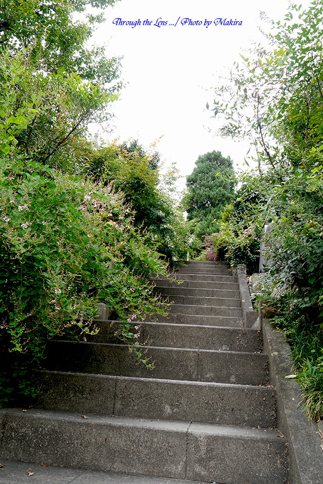 石段を登って本堂へL