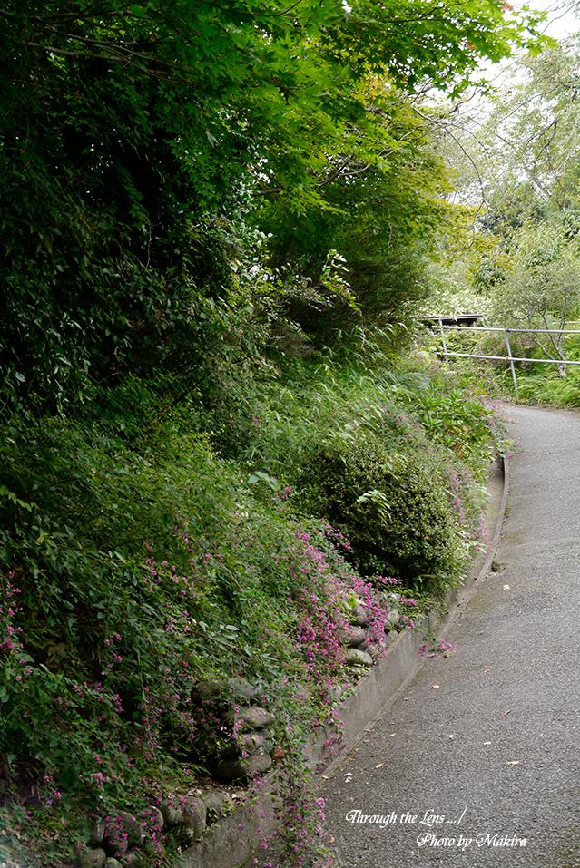 萩山の道の両側には萩がL1
