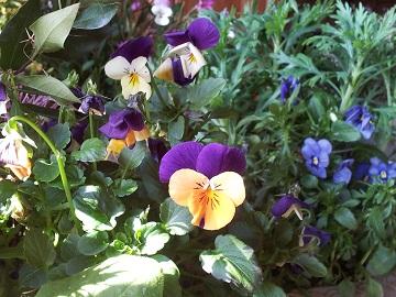 大寒の朝の花