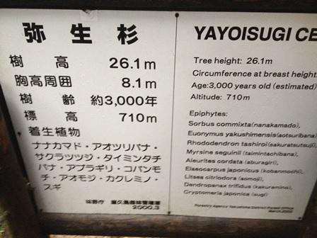 yaku18.jpg