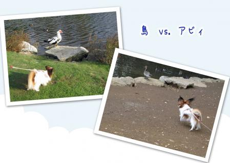 鳥 対 アビィ