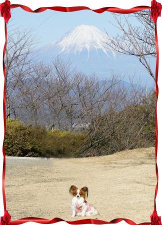 2011-日本平から
