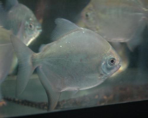 トカンチスセナブルギー 銀タイプ 341_convert_201106300109492011329