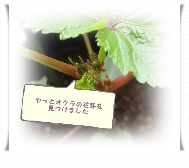 P7132567.jpg
