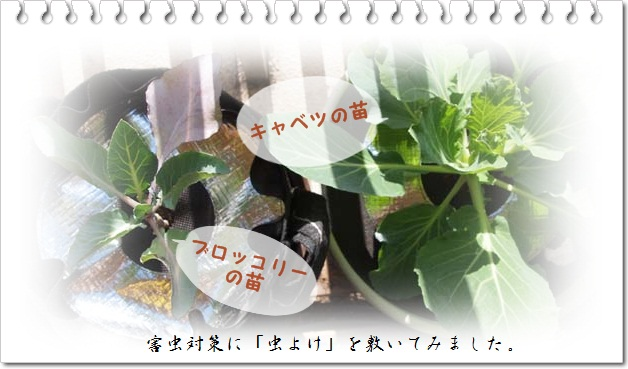 PC096981.jpg