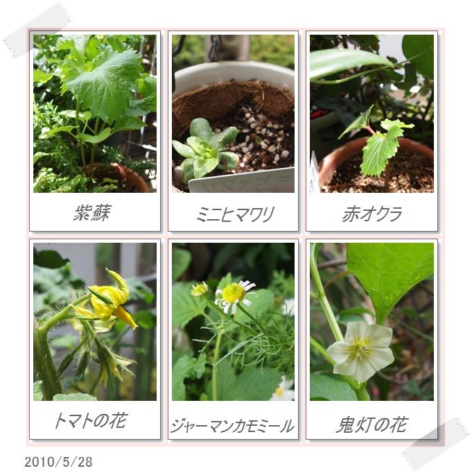 flower0528-2.jpg