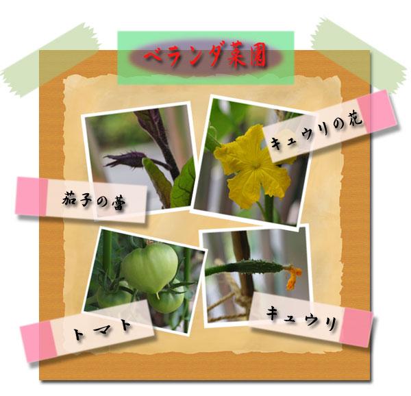 flower0528.jpg
