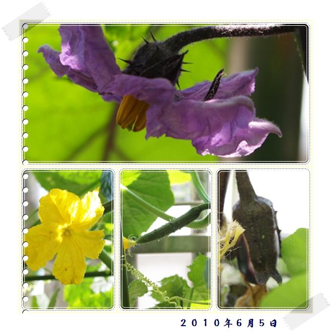 flower0605.jpg