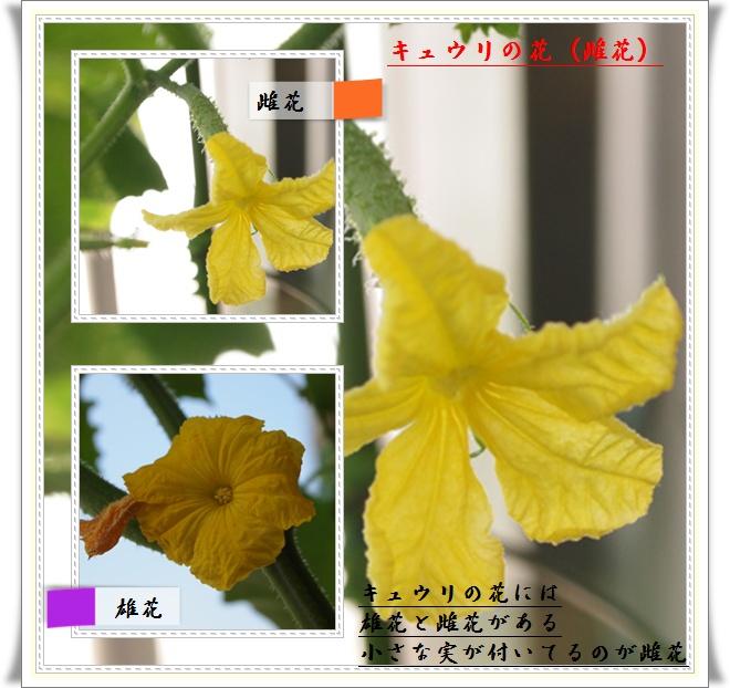 flower0617.jpg